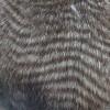 Искусственный мех Песец птичка коричневая (метр )